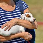 best pet insurance for large breed dogs